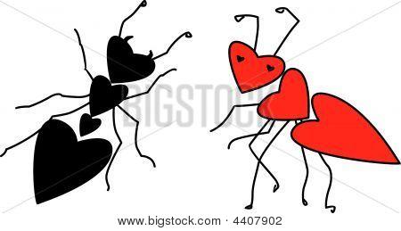 Ants In Love