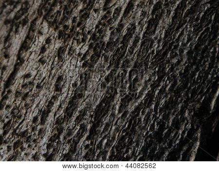 Privet Bark - Macro View