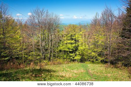 beautiful springtime on carpathian mountains