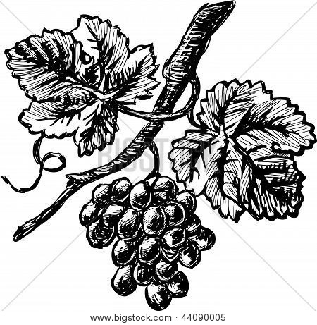 Grape Branch