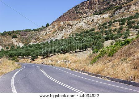 Olive Trees On Crete