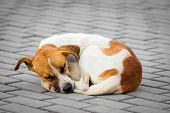 stock photo of stray dog  - Homeless abandoned dog sleeping on the street - JPG