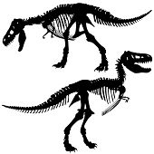 stock photo of dinosaur skeleton  - Editable vector silhouettes of the skeleton of a Tyrannosaurus rex dinosaur - JPG