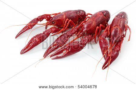 Crayfishes isolated on white background