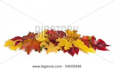 Group of colorful autumn leaves isolated on white background