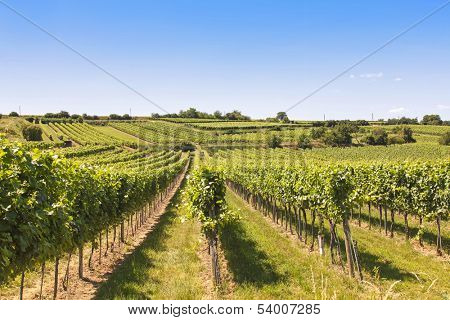 Vineyards landscape in Wachau, Austria