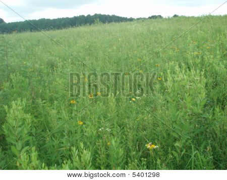 Meadow In Pa.