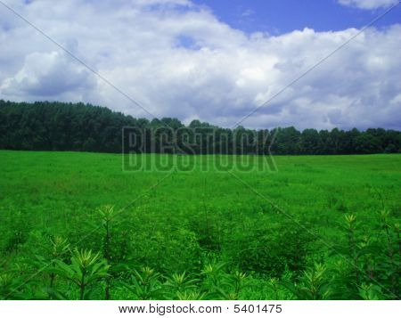 Bright Color Picture Of Meadow