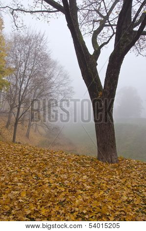 Beautiful Autumn Park Landscape With Leaves And Fog