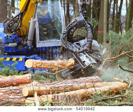 PILSEN CZECH REPUBLIC - NOVEMBER 14: unidentified lumberjack with modern harvestor working in a forest on November 14, 2013. Forestry is Czech's traditional industry with a very long history.