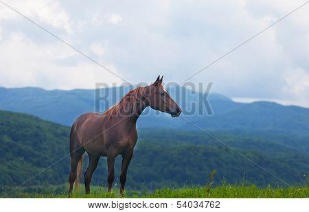beautiful bay horse