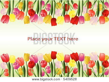 Tulips Frame