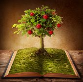 picture of bonsai tree  - Tree of knowledge growing out of book - JPG
