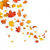 image of fall decorations  - Autumn falling leaves isolated on white background - JPG