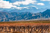 stock photo of aconcagua  - Volcano Aconcagua and Vineyard - JPG