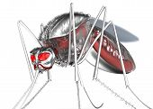 pic of gnats  - Mosquito - JPG