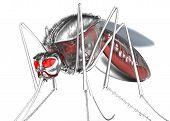image of gnat  - Mosquito - JPG