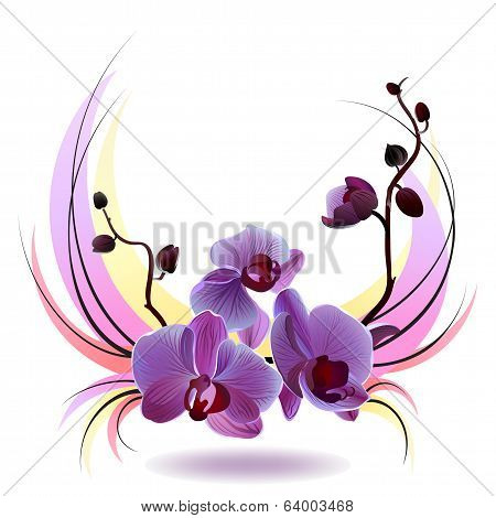 Vector greeting card with orchids bouquet
