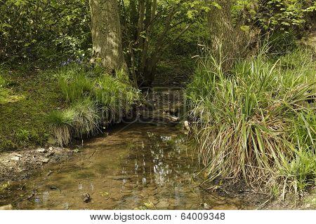 Swithland Stream
