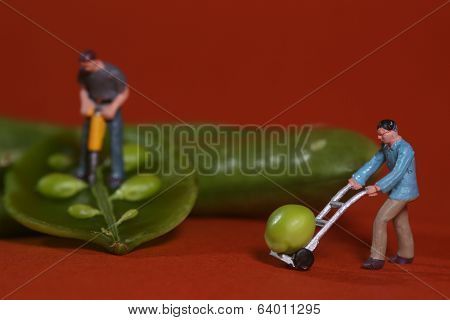 Miniature Construction Workers in Conceptual Food Imagery With Snap Peas
