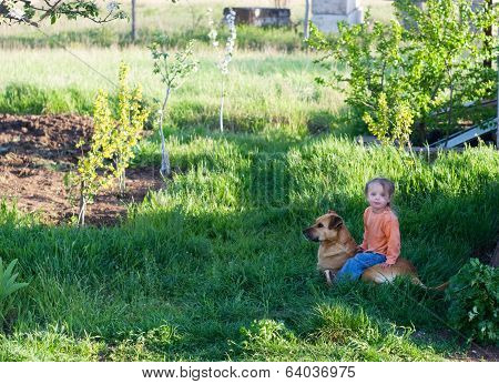Little Cute Girl Sits Astride The Big Dog