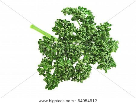 Food  Ingredient Parsley