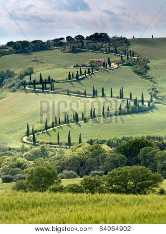 Curves and cypresses along a road in the Tuscan hills near Al Foce