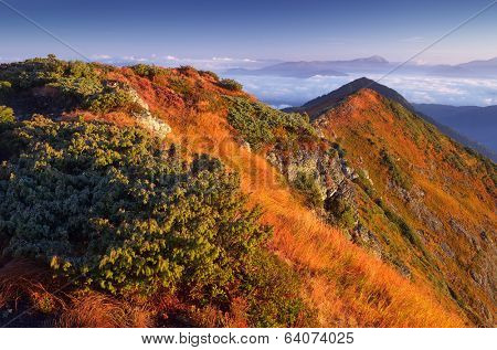 Warm sunlight on the mountain slopes. Morning landscape with mountain peaks. Dry autumn grass in the light of the rising sun. Carpathians, Ukraine, Europe