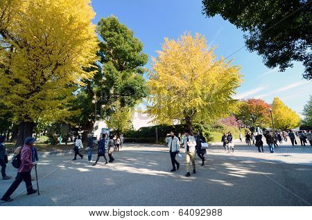 Tokyo - November 22: Visitors Enjoy Colorful Trees On November22, 2013 In Ueno Park, Tokyo