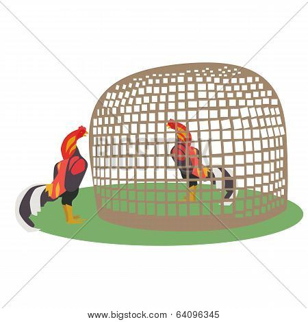 Chicken In Coop