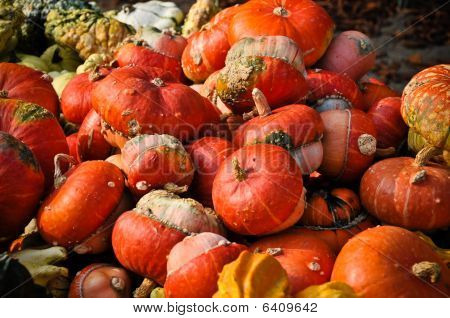 Delicious Red Pumpkin