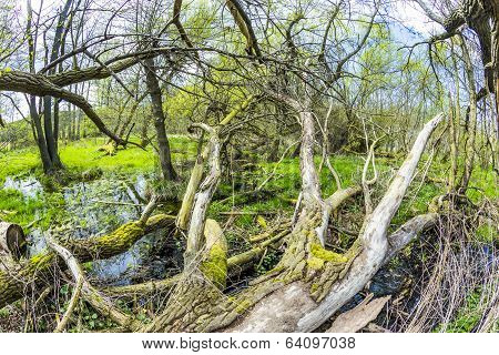 Romantic Forest In The Nature Park Gnitz