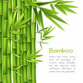 stock photo of bamboo forest  - Realistic green bamboo plant grass tree oriental japanese background vector illustration - JPG
