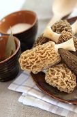 foto of morchella mushrooms  - Fresh spring morel mushrooms on a plate