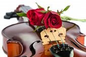 image of violin  - Closeup of violin bridge and rose isolated on white - JPG