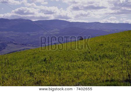 Landscape Of Maremma (tuscany)