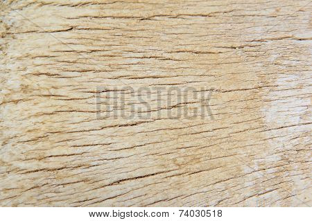 Bone Texture and Background - Hard Natural Surface