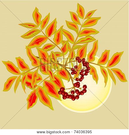 Rowanberry And Sun Vector