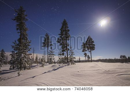 Starry Moonlit Sky Over Snow-covered Trees