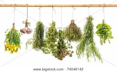 Hanging Bunches Of Fresh Spicy Herbs. Herbal Medicine