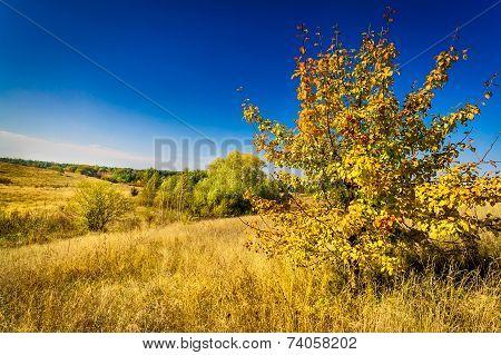 Colorful Autumn Motif.