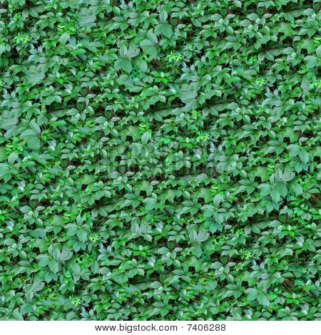 Green Leafs Seamless Background.