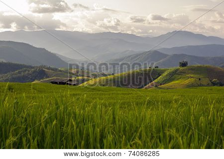 Rice field in the north of Thailand