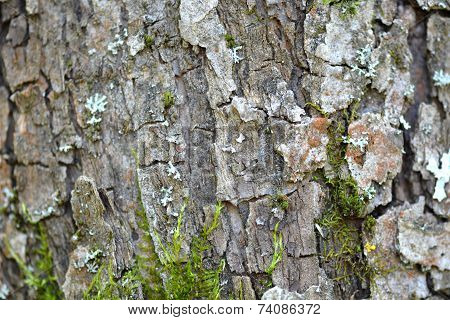 Grunge Wooden Texture Used As Background, Wood Bark