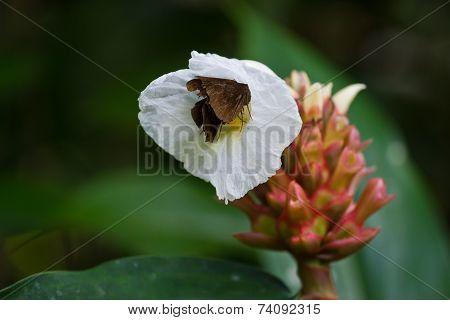 Curcuma Flowers