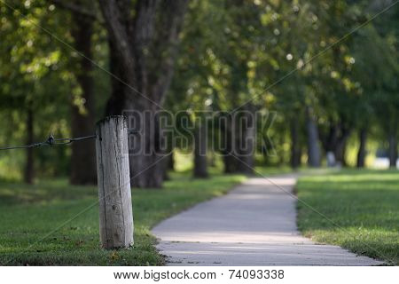 Long summer path