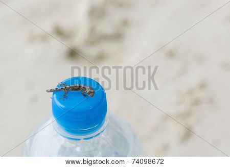 Baby Salamander On Bottle Cap