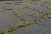 picture of weed  - Asphalt parking loth that is cracked and full of weeds - JPG