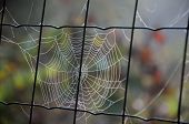 pic of chain link fence  - Cobweb on the chain link fence in the garden in the fall - JPG