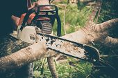 image of man chainsaw  - Man cuts tree with chainsaw - JPG